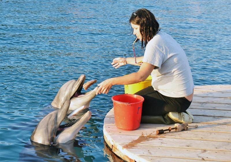 Как кормят дельфинов
